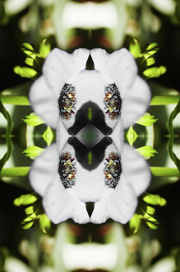 Gerbera Flower Photograph by Silvia Otte