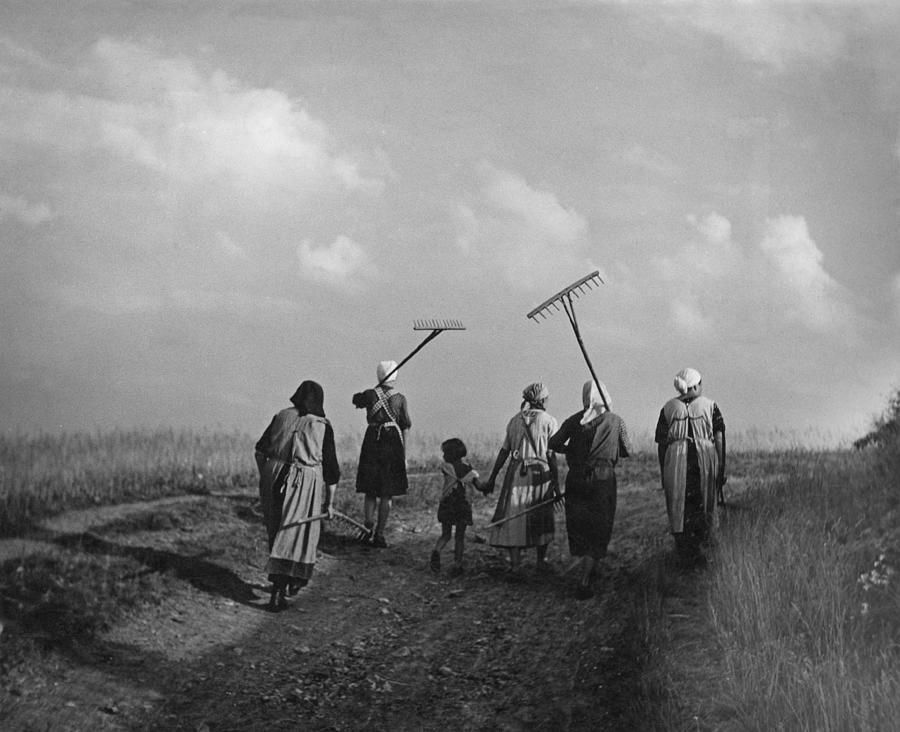 German Farming Photograph by Fpg