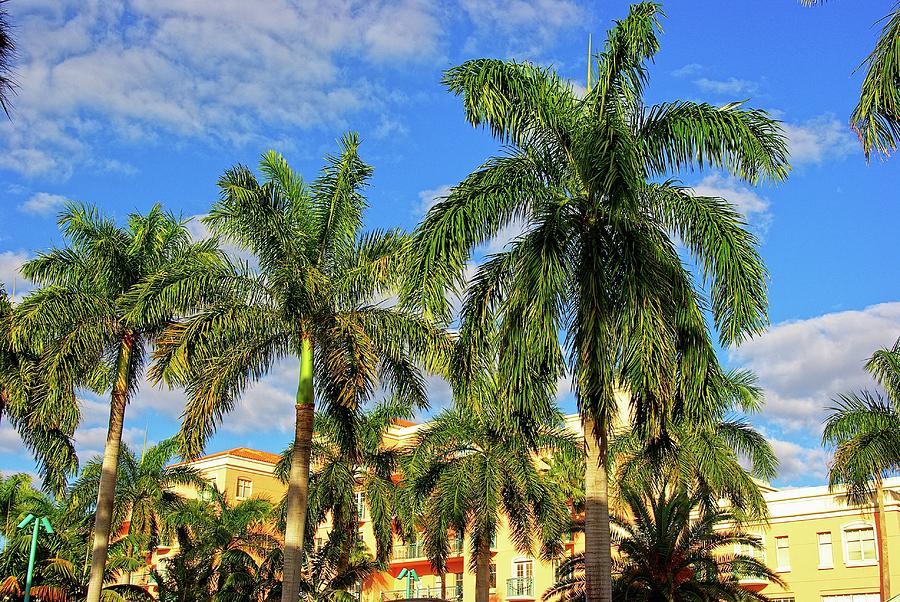 Palm Trees Photograph - Glorious Palms by Zal Latzkovich