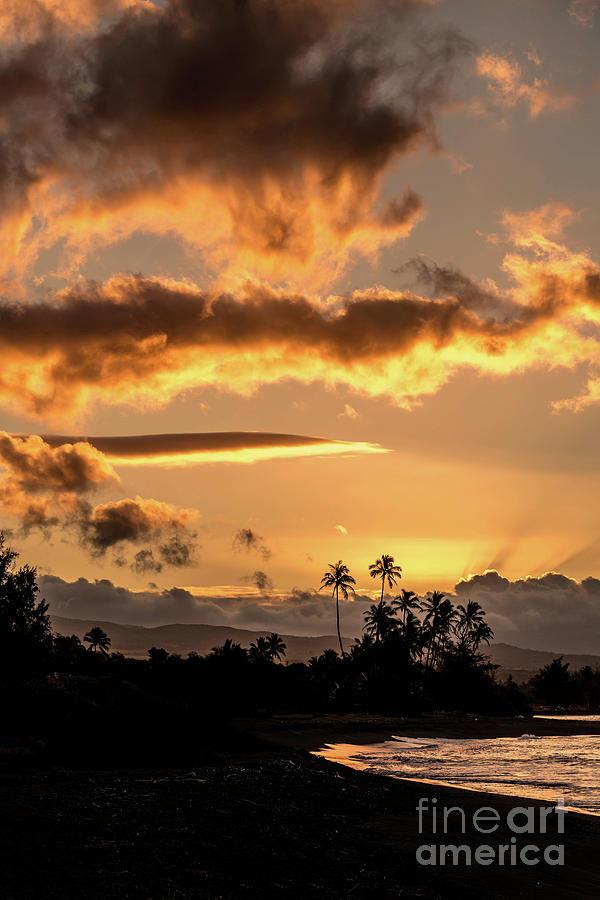 Golden Light by Susan Garver