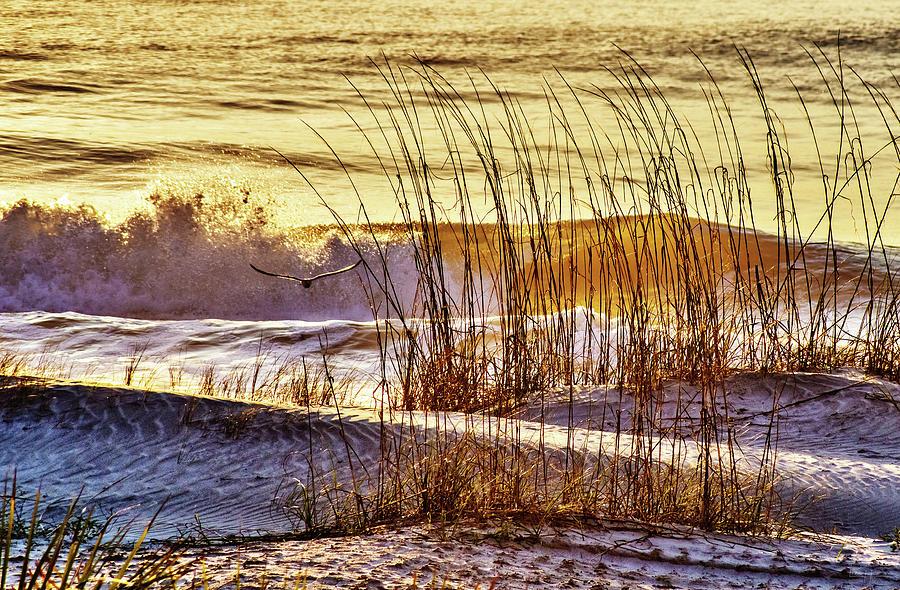 Golden Tybee Island Sunrise #1- Seagull and Atlantic ocean wave at Tybee Island Beach Georgia by Peter Herman