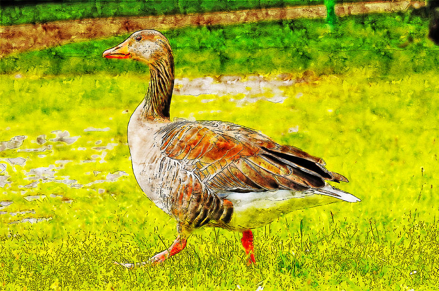 Goose watercolor drawing by Hasan Ahmed