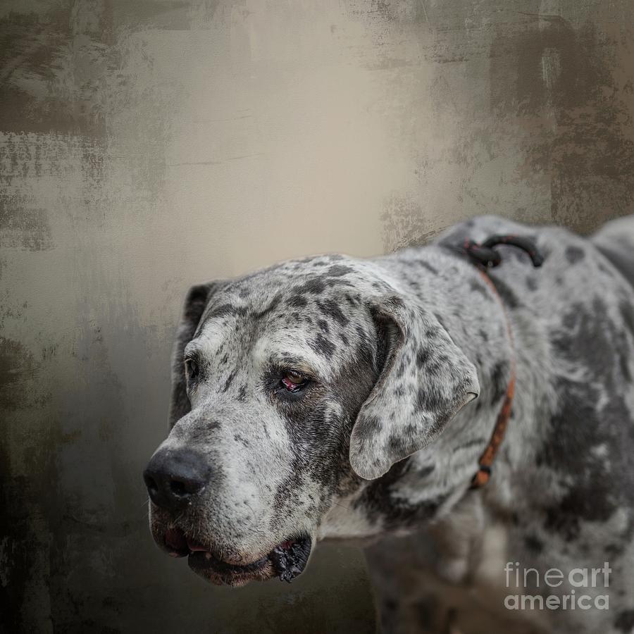 Great Dane Portrait by Eva Lechner