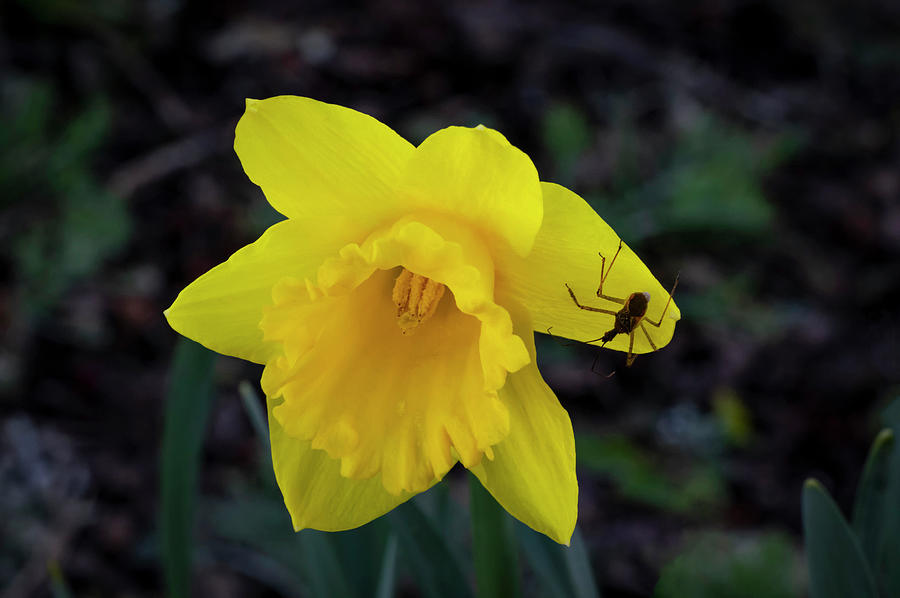 Greeting Spring by Steven Clark