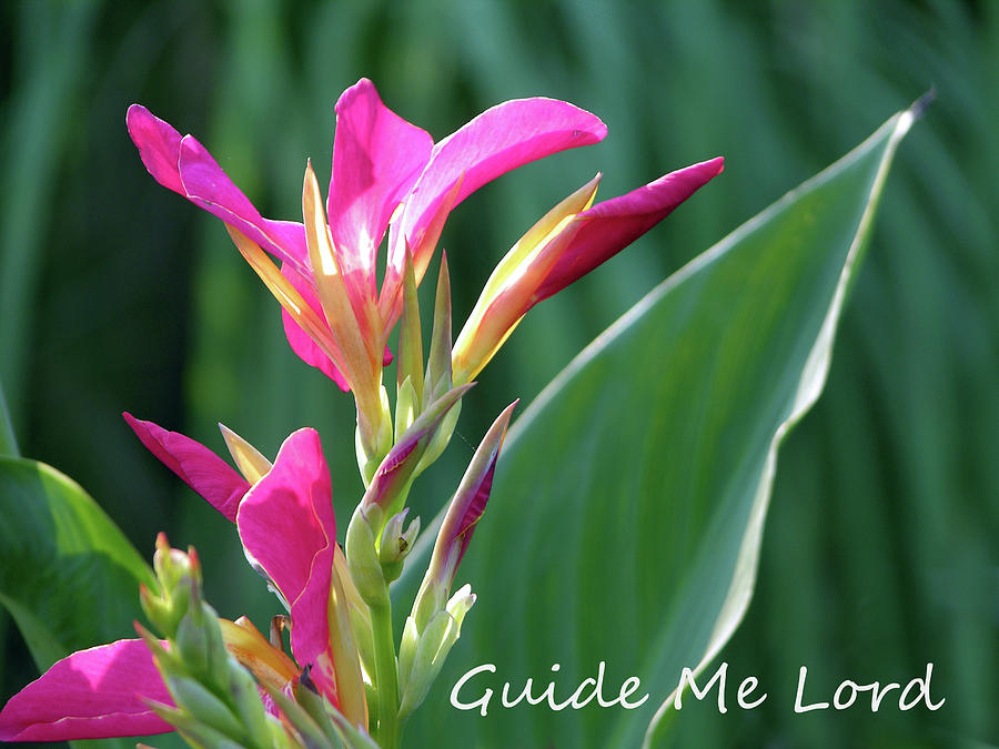 Flower Photograph - Guide Me Lord by John Lautermilch