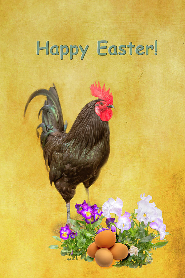 Happy Easter Black Rooster 0957 Photograph By Kristina Rinell