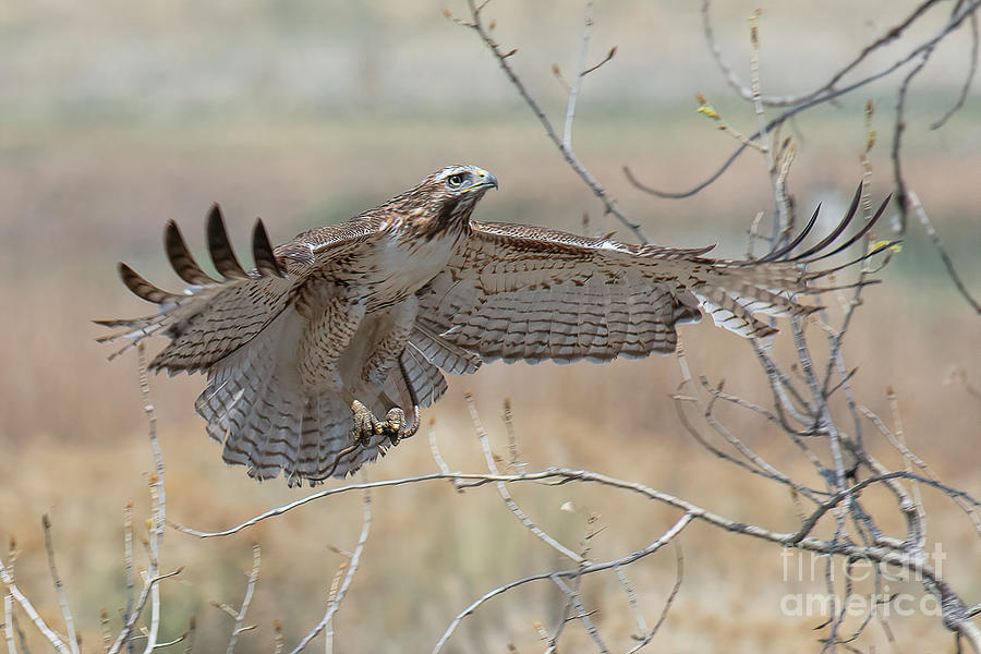 Happy Landing by Jim Garrison