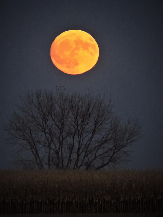 Harvest Moon  by Lori Frisch