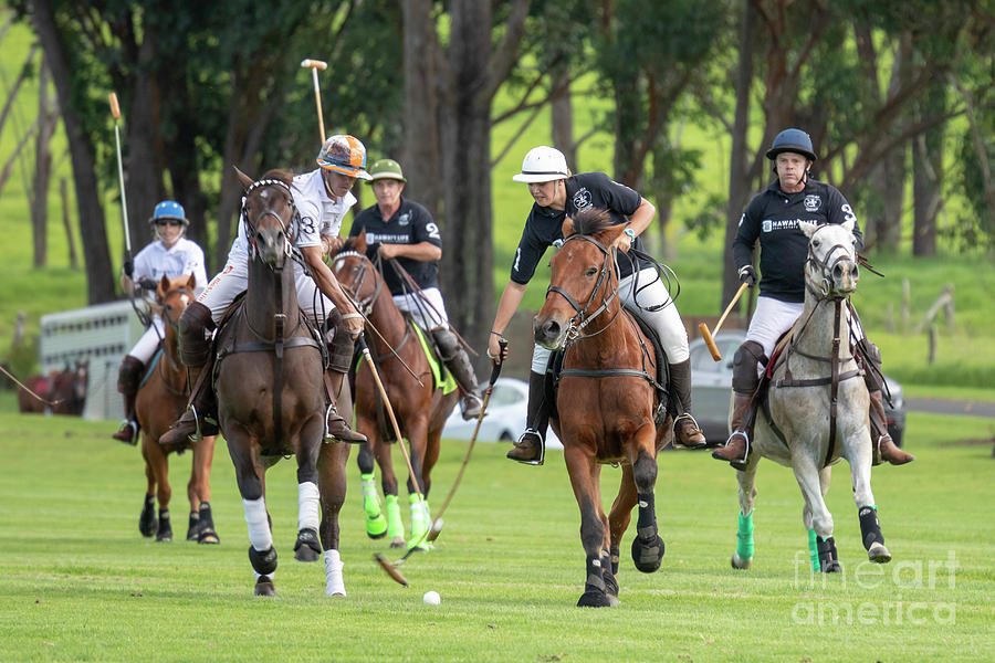 Hawaii Polo by Jim West