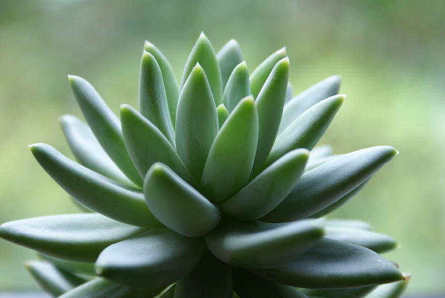 Healthy Green Houseplant Photograph by Dorin s