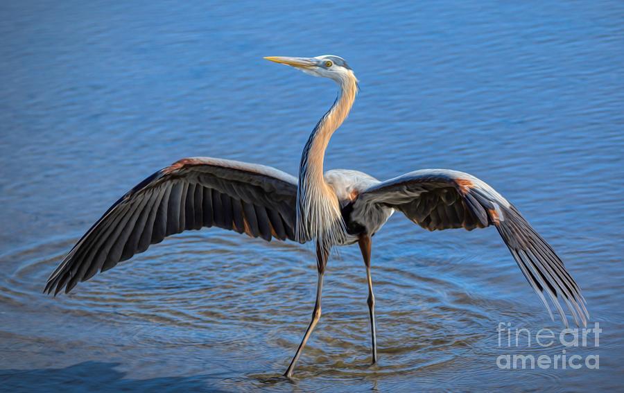 Heron With Attitude by Paulette Thomas