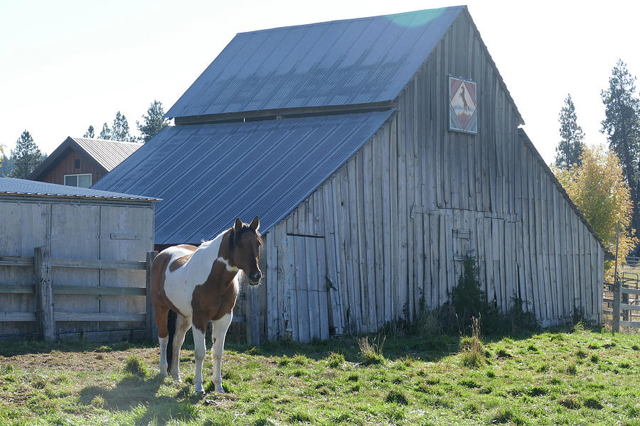 Horse and old barn in pasture along the Teanaway  by Steve Estvanik