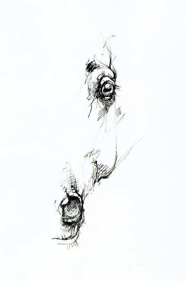 Horse head  by Angel Ciesniarska