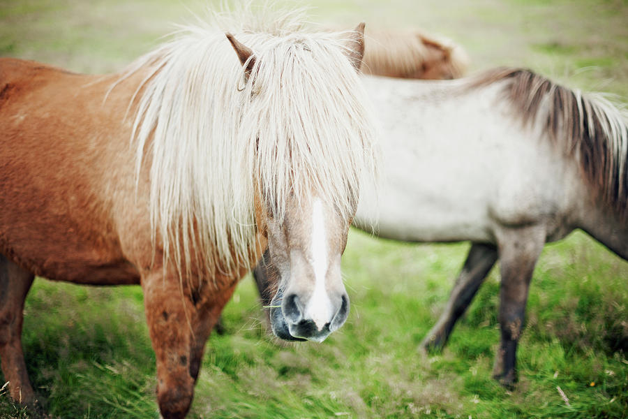 Horses Photograph by Markus Renner