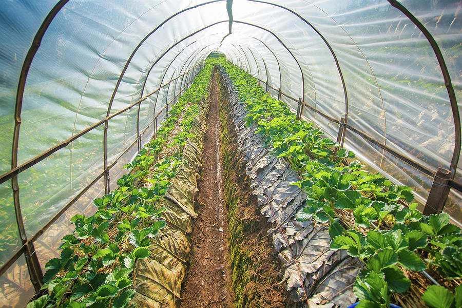 Hydroponic Vegetable In A Garden Photograph by Primeimages