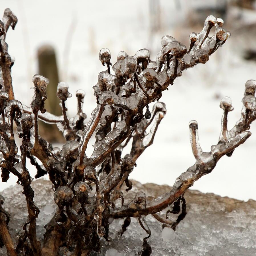 Iced by Mark Salamon