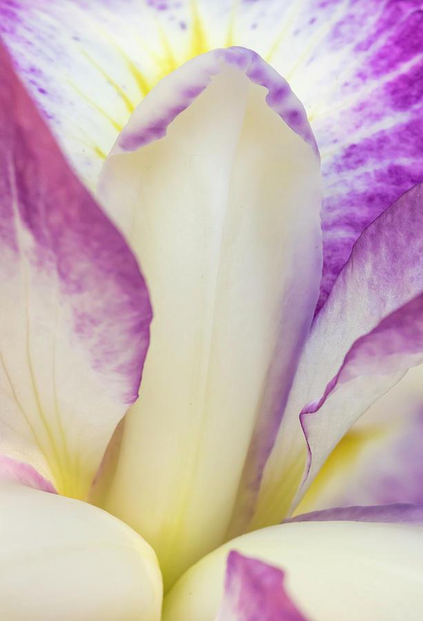 Bloom Photograph - Iris Bloom, Portland Japanese Garden by William Sutton