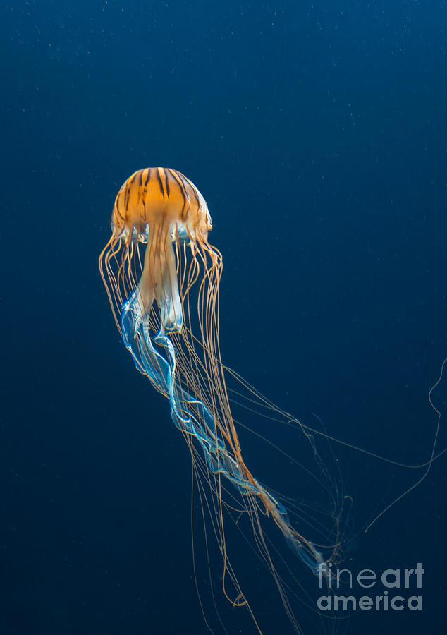 Deep Photograph - Jellyfish by Ileysen