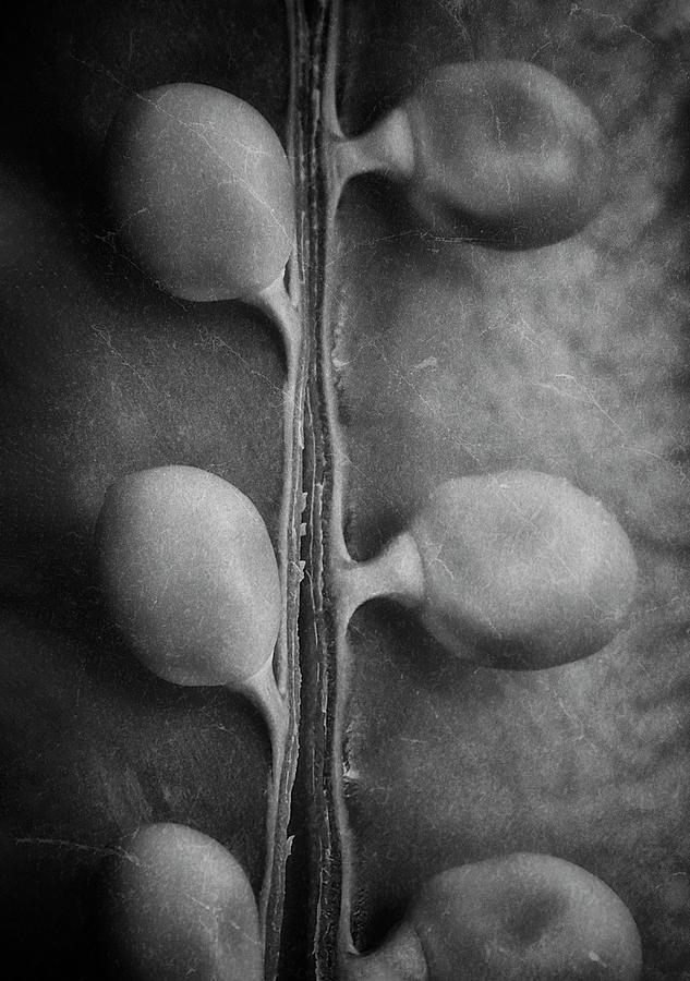 Just Peas in a Pod by Tom Mc Nemar