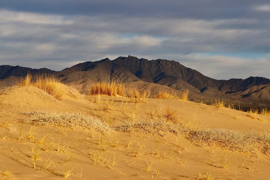 Kelso Dunes Photograph - Kelso Dunes by Maria Jansson