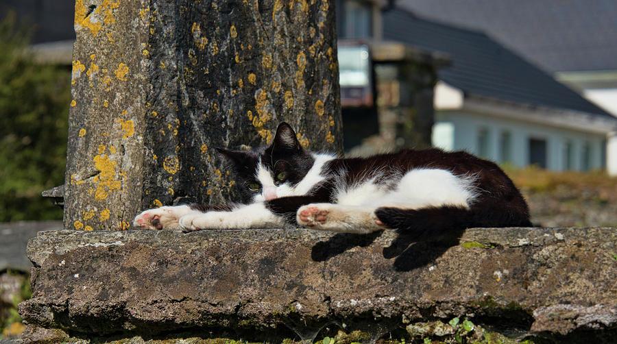Kinsale Church Cemetery Kitty by Curt Rush
