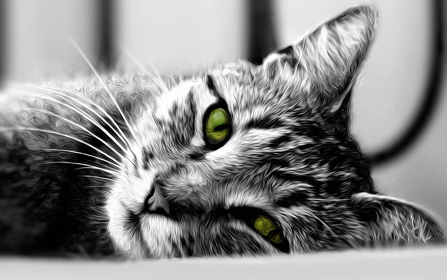 Kitty the Kat by Anna Yanev