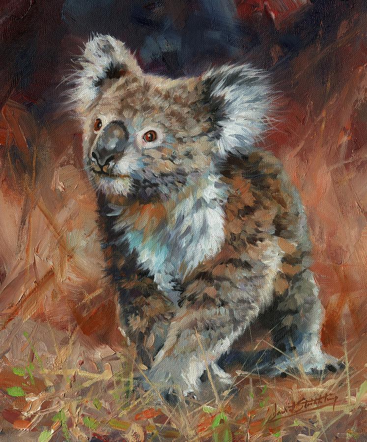 Koala by David Stribbling