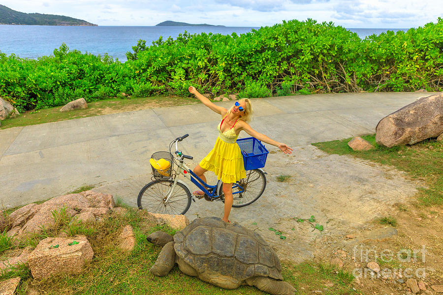 La Digue Giant Tortoise by Benny Marty