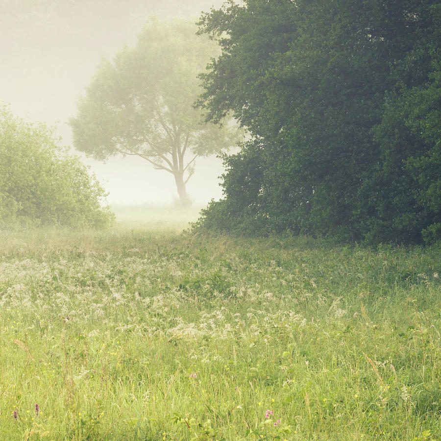 Landscape Photograph - Landscape In Fog by Toby Luxberg