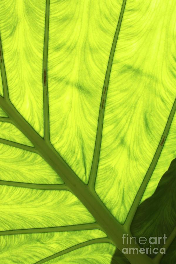 Large Green Leaf With Veins Digital Art