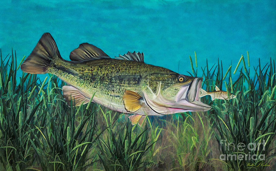 Large Mouth Bass Digital Art By Walter Colvin
