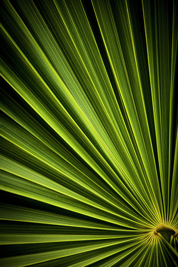 Leaf Photograph by Instants