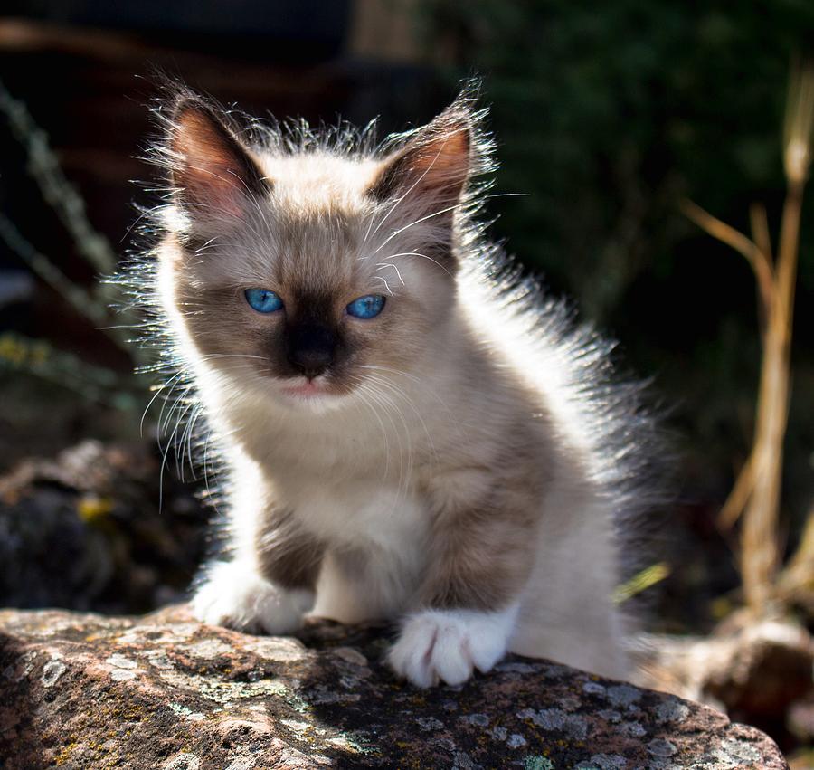 Lil Blue Eyes Photograph