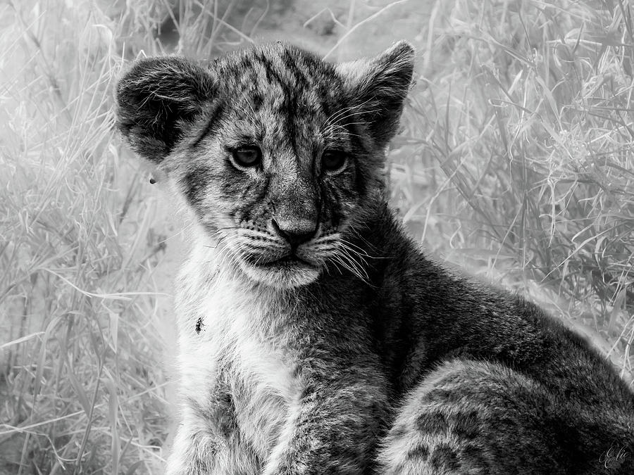 LITTLE SIMBA by Elie Wolf