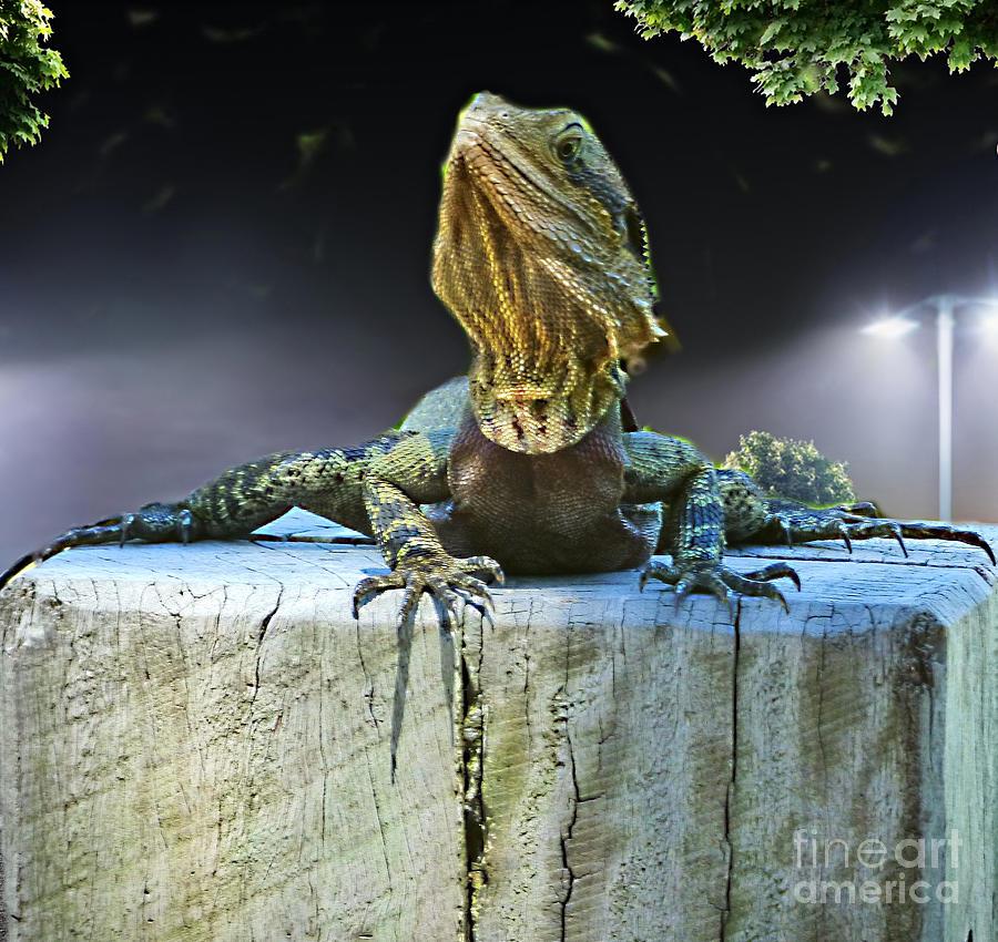 Lizard on a Log  by Trudee Hunter