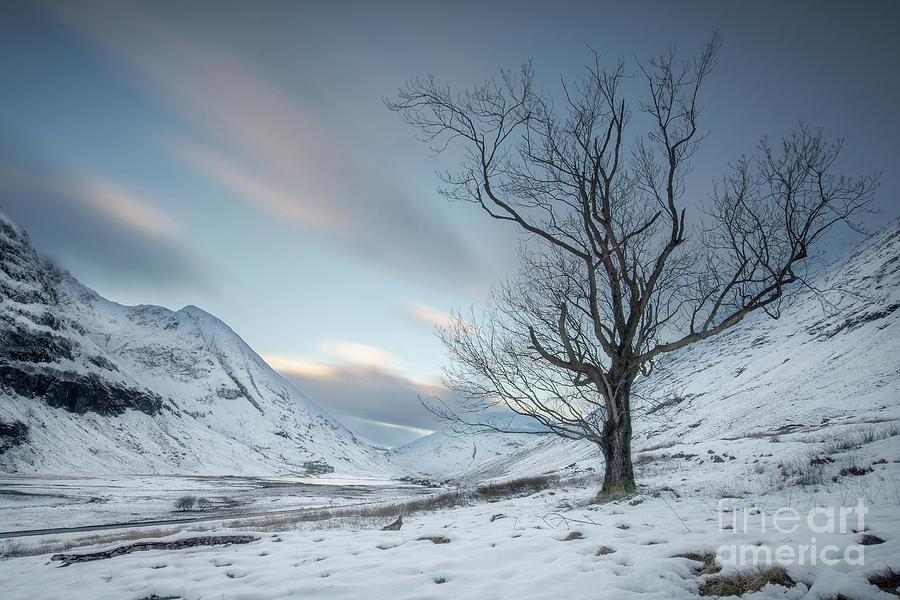 Loch Achtriochtan Tree Photograph