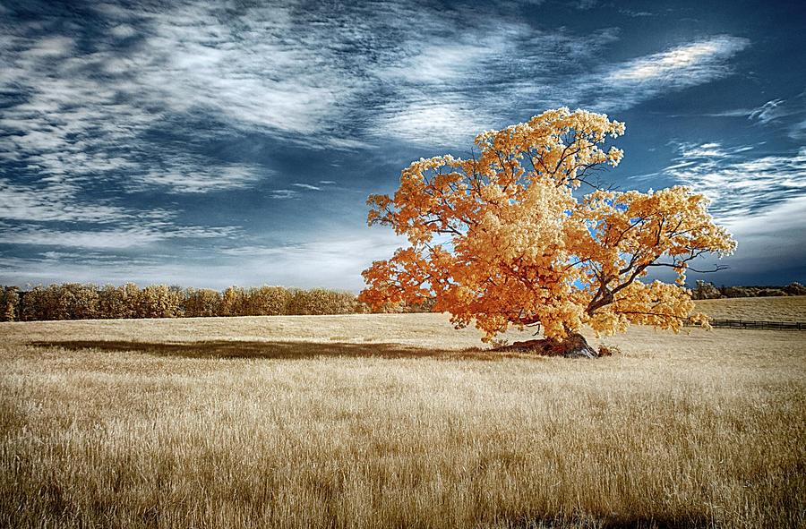 Lone Tree by Dan Urban
