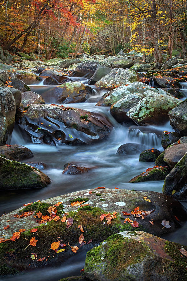 Big Creek, Great Smoky Mountains, Tennessee    by Harriet Feagin