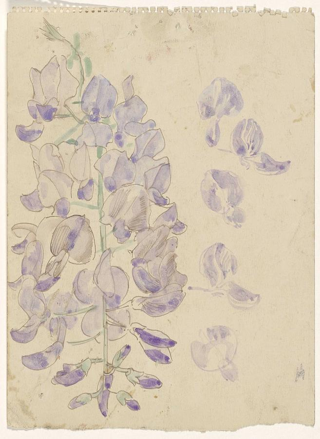 Lupine, Carel Adolph Lion Cachet, 1874 - 1945 Painting