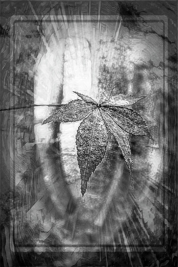 Maple Leaf in Autumn Burst of Light Black and White by Debra and Dave Vanderlaan