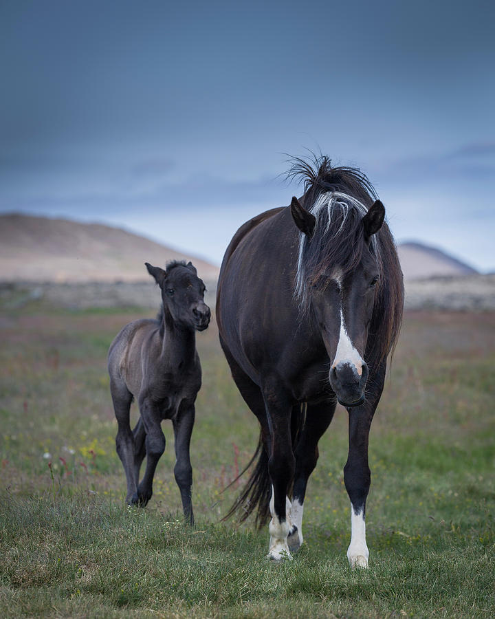 Mare And Foal Photograph by Arctic-images