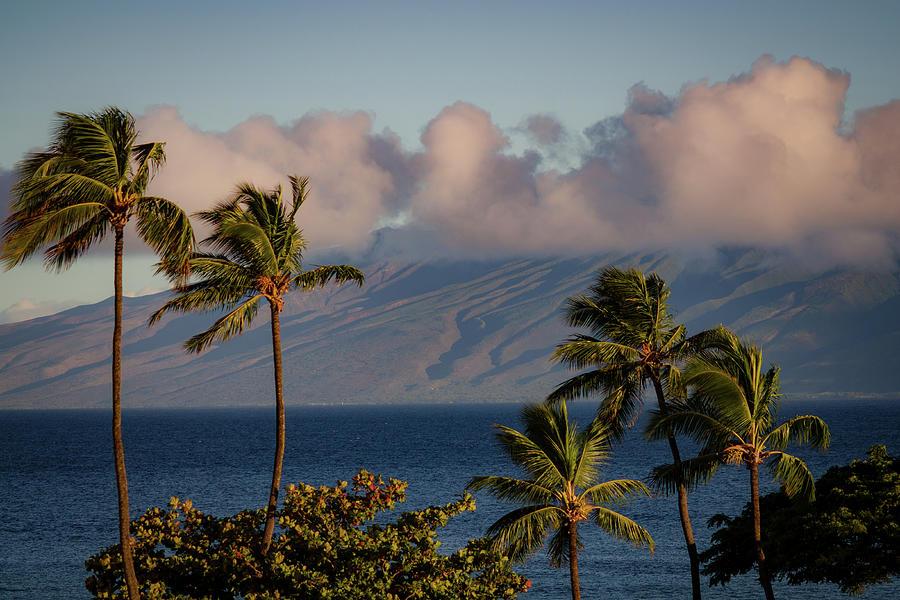 Maui Palms by Jeff Phillippi