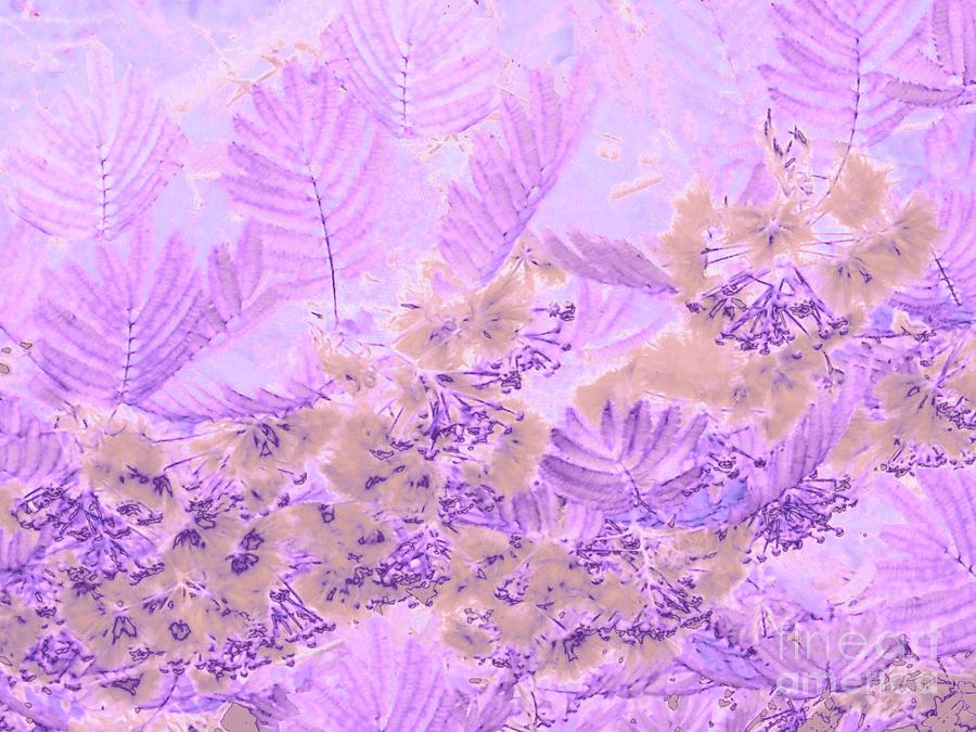 Mimosa by Cveti Dinkova