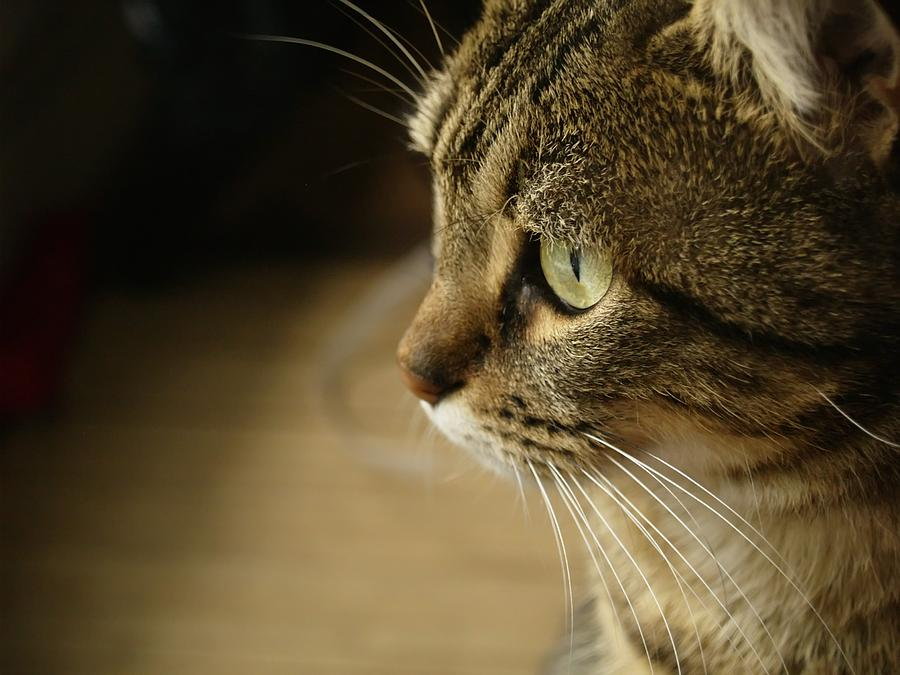 Cat Photograph - Minouche 1 by Christine AVIGNON