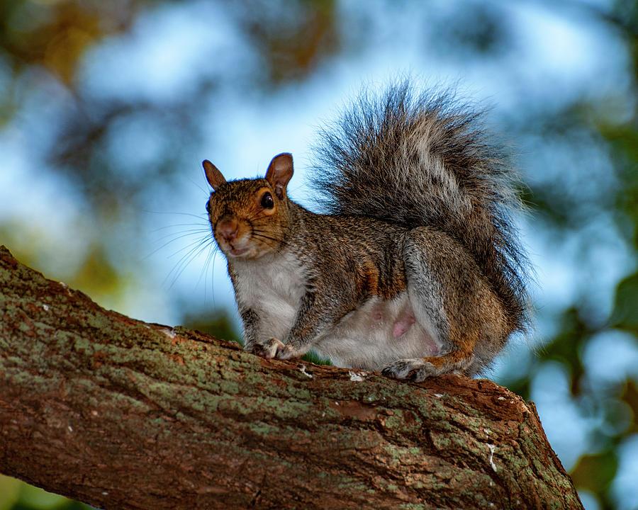 Momma Squirrel by Cathy Kovarik