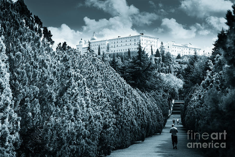 Monte cassino abbey fron the polish Cemetery by Peter Noyce