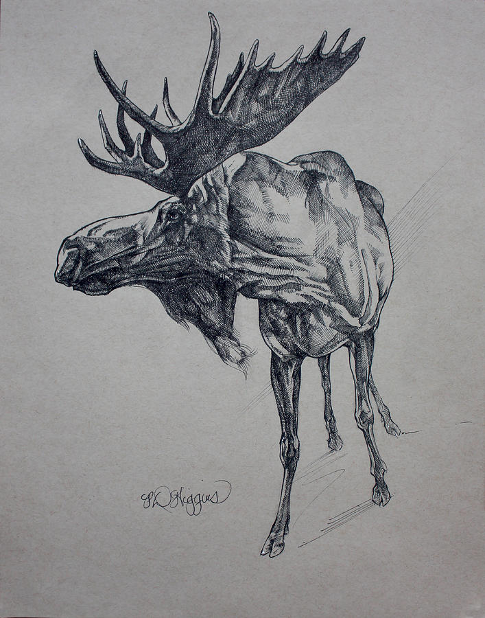 Moose Sketch by Derrick Higgins