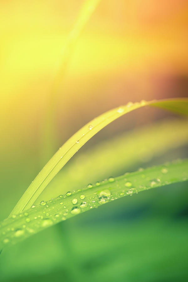Morning Dew On Blades Of Grass With Photograph by Pawel.gaul
