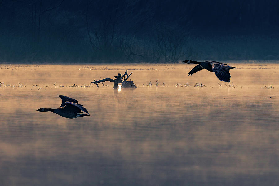 Morning Flight by Allin Sorenson