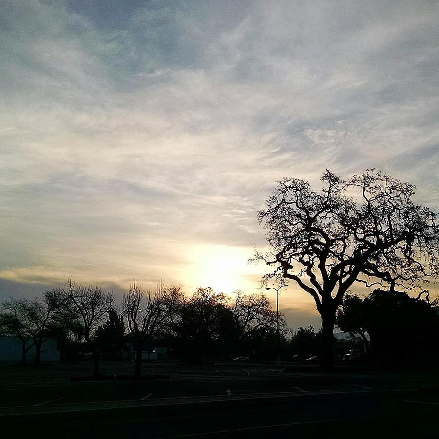 Morning sun by Steven Wills